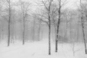 Winter Picture.jpg