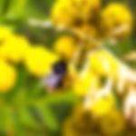 Abeille Butinant - Protection environnement