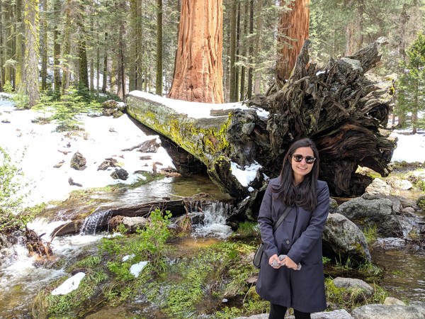 Sequoia National Forest, California
