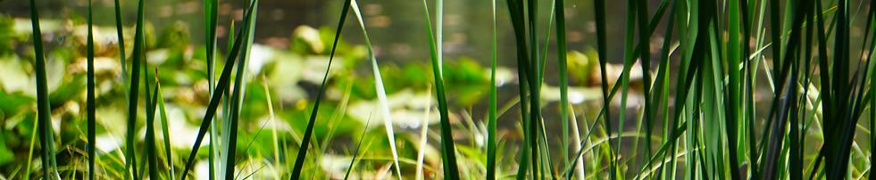Grass around the lake