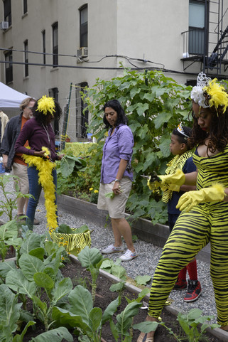 Catsuit Gardening - Bronx, NY