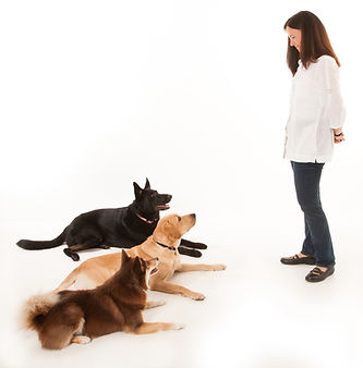 Sound Roots Puppy Coaching