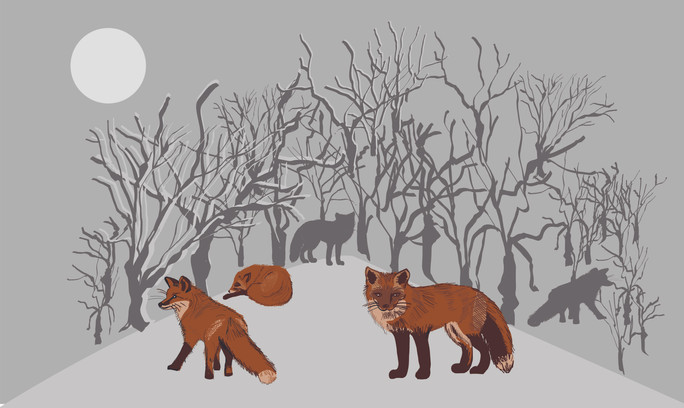 winter foxes