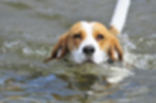 dog-4405081_1920.jpg