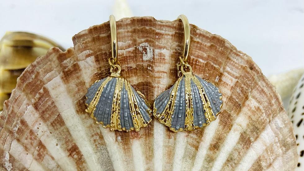 Shell earrings on hoop clasp