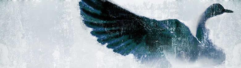 Wild Goose image