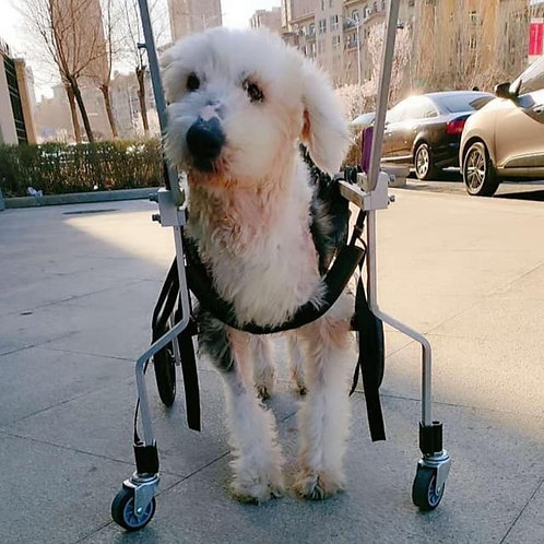 A custom made wheelchair for Eclipse
