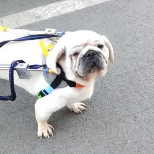 A custom made wheelchair for Binks