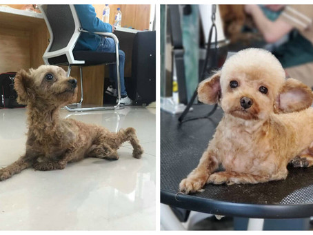 Meet our disabled dogs.