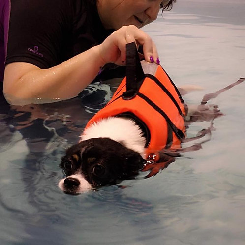 Two hydrotherapy sessions for a dog