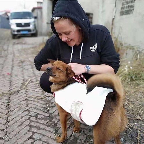 Warm coat for a shelter dog.