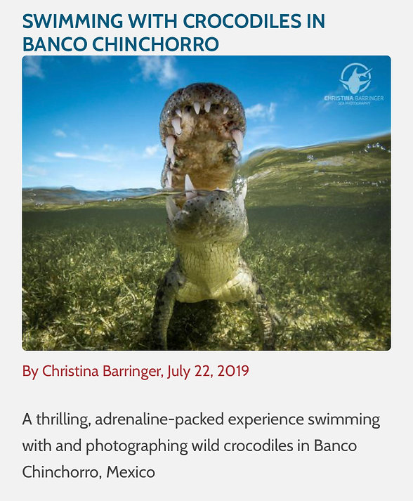 Christina Barringer underwater photograph guide crocodile article