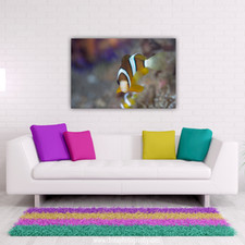 anemone fish bokeh