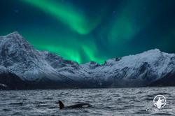 Combo photo: Best of Norway
