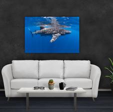 Whale Shark, Isla Mujeres