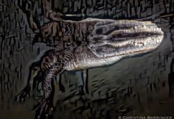 Gator, FL: DIGITAL ART
