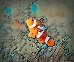 Clownfish; Anilao, Philippines: DIGITAL ART