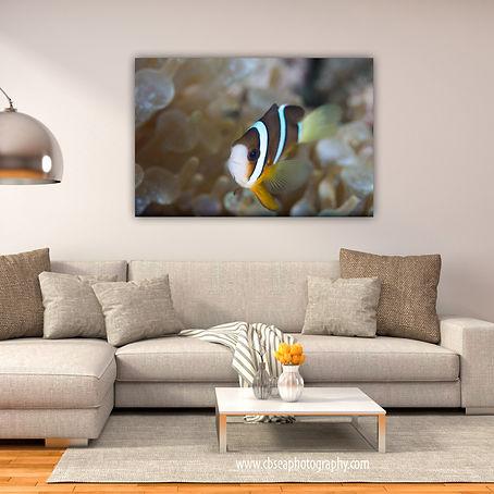 Anemone Fish Room Display