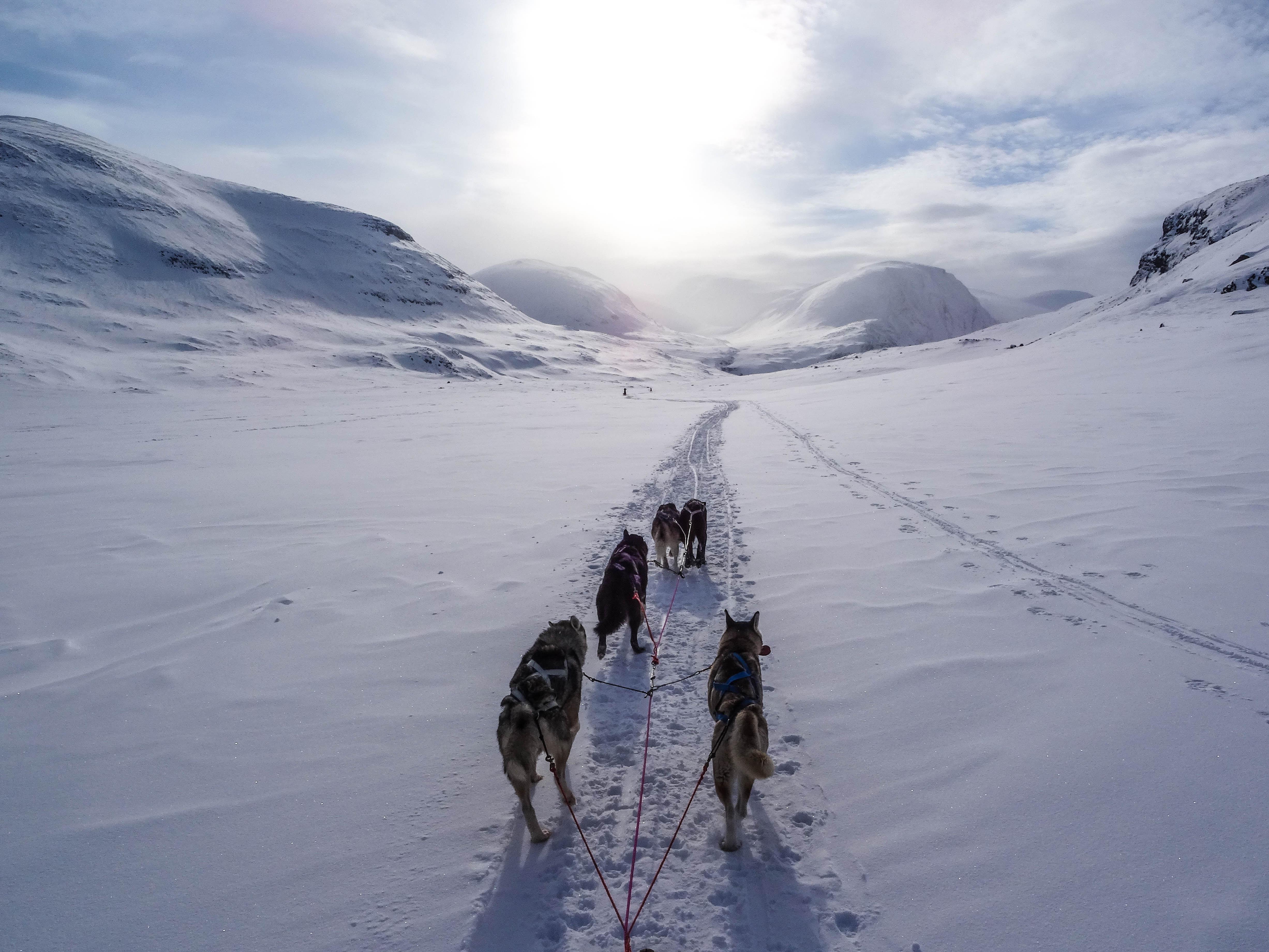 4 Hours Dogsledding