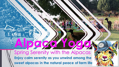 Alpaca Yoga-spring serenity.jpg