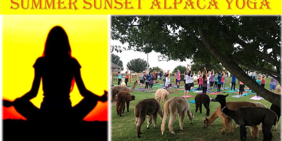 Summer Sunset Alpaca Yoga