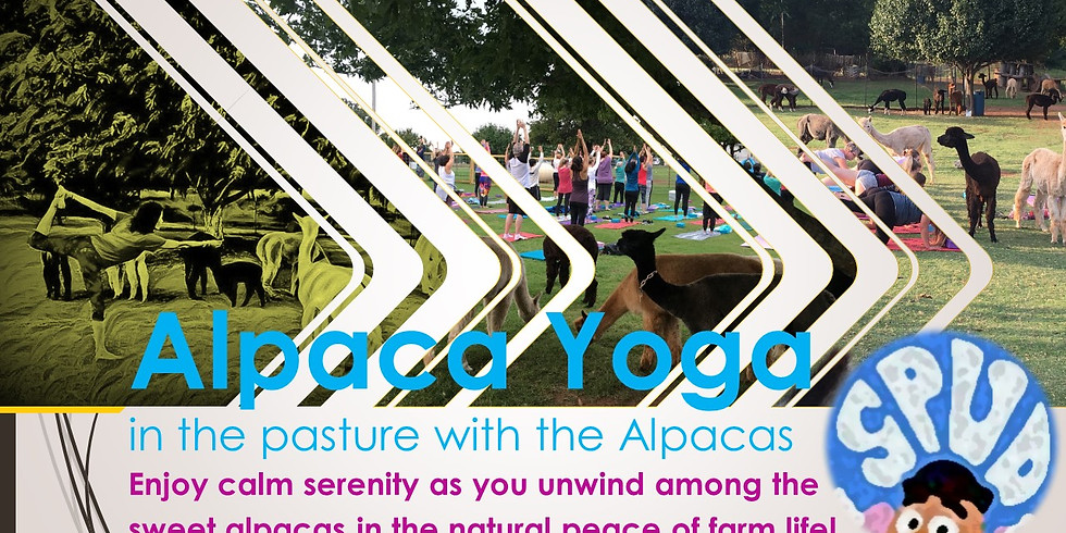 SPUD Week Alpaca Yoga Fundraiser Event