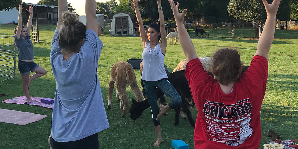 Alpaca Yoga Sunrise-NEW DATE/TIME