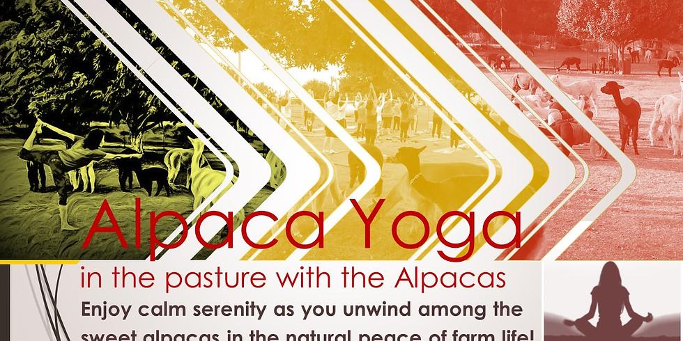 Alpaca Yoga: Autumn Afternoon