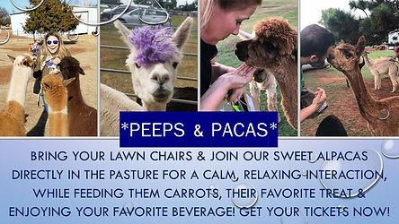 Peeps, Pacas & carrots (2).jpg