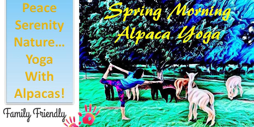 Spring Morning Alpaca Yoga