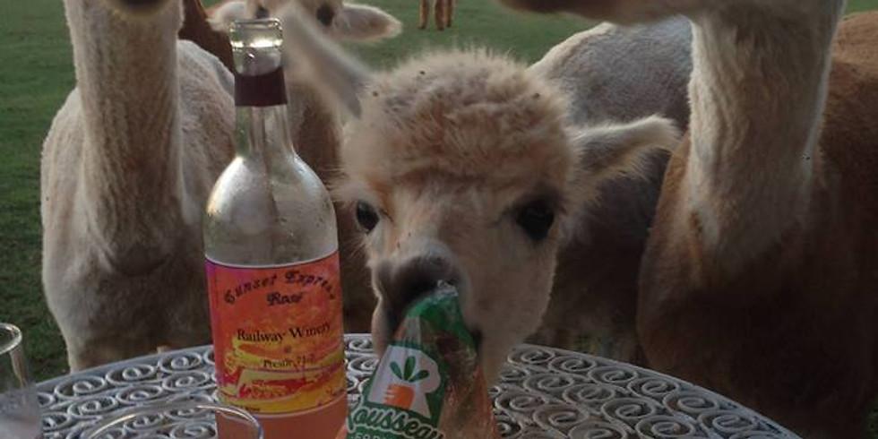Alpacas and Wine (1)