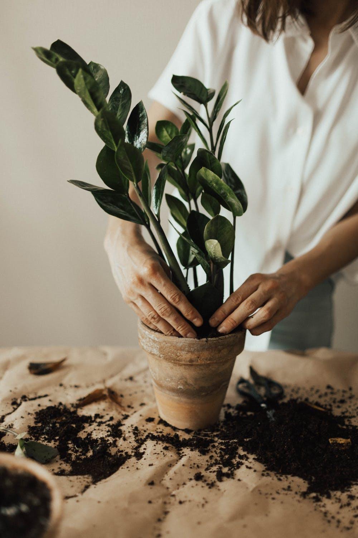 Comment prendre soin de ses plantes avec Hokko