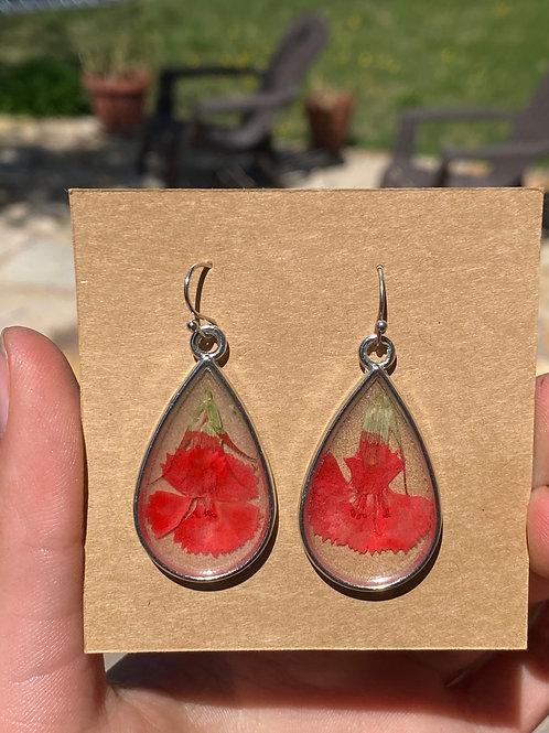 Red Teardrop flowers!