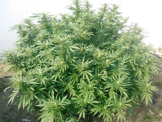 Hard lessons from last grow