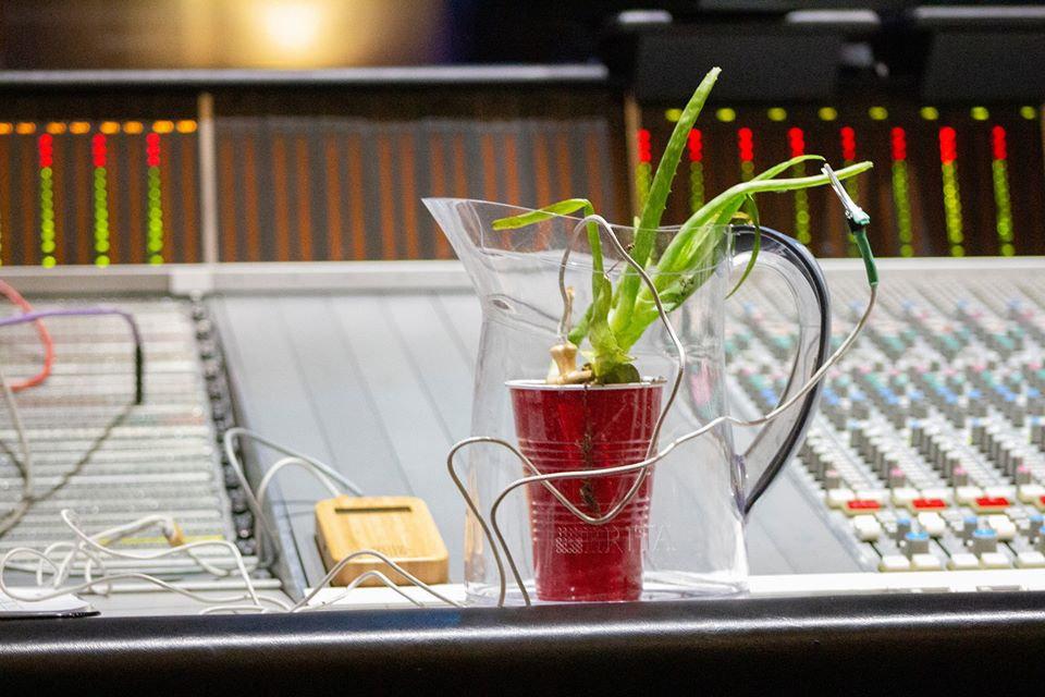 Plant Music Aloe Studio.jpg