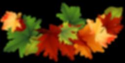 clipart-leaf-clipart-transparent-3.png