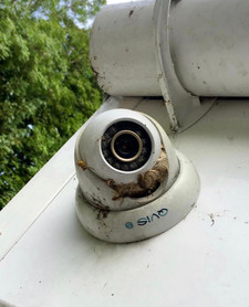 Nest in Security Camera