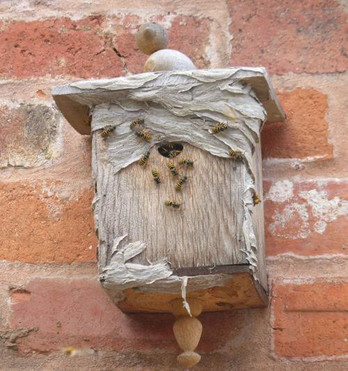 Bird Box Wasp Nest