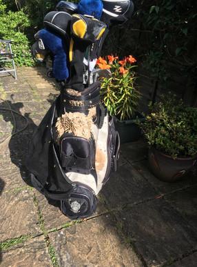 Golf Bag Wasp Nest