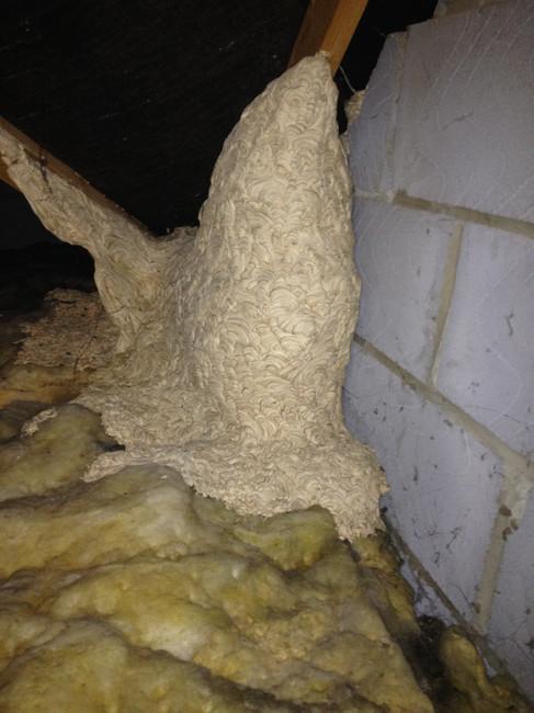 Nest in Loft