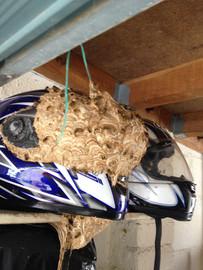 Motorcycle Helmet Nest