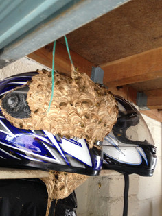 Motorcycle Helmet Nest
