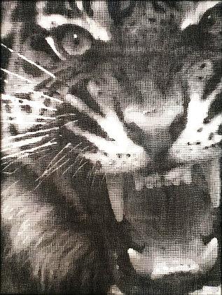 J.M Collell - Tiger