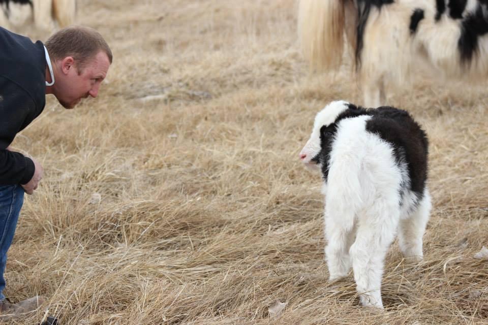 Matt checking on new baby yak
