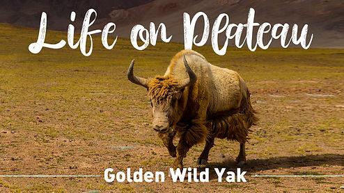 yak plateau image.jpg