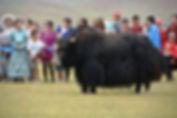mong yak 4.jpg