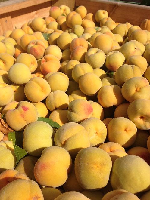 Golden Tatura Peaches