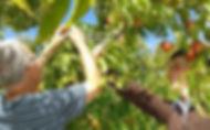 Johnsons Cottage Orchard