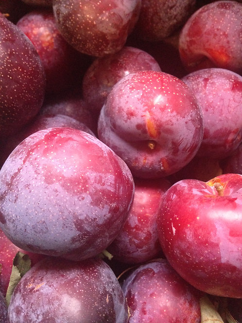 Red Beaut Plums