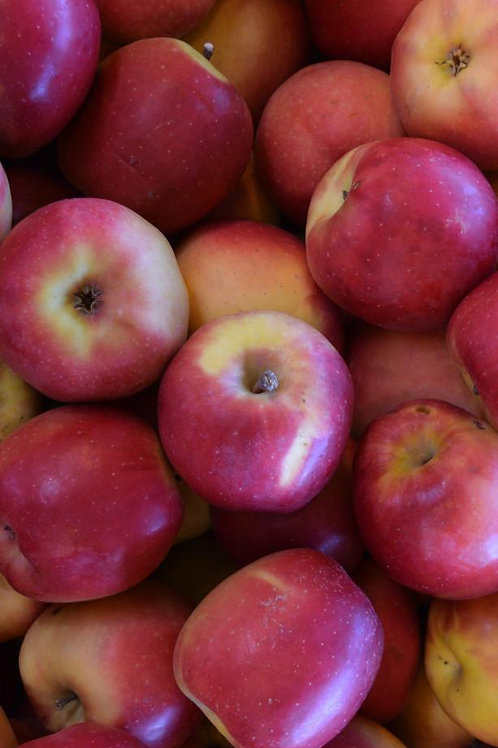 Pacific Rose Apples
